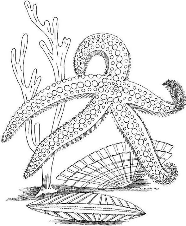 ocean life coloring pages # 37