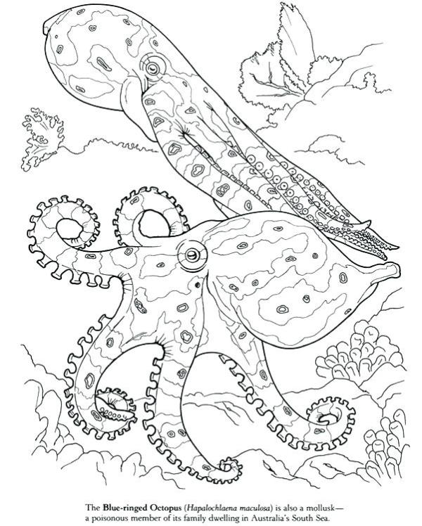 squid coloring sheets # 18