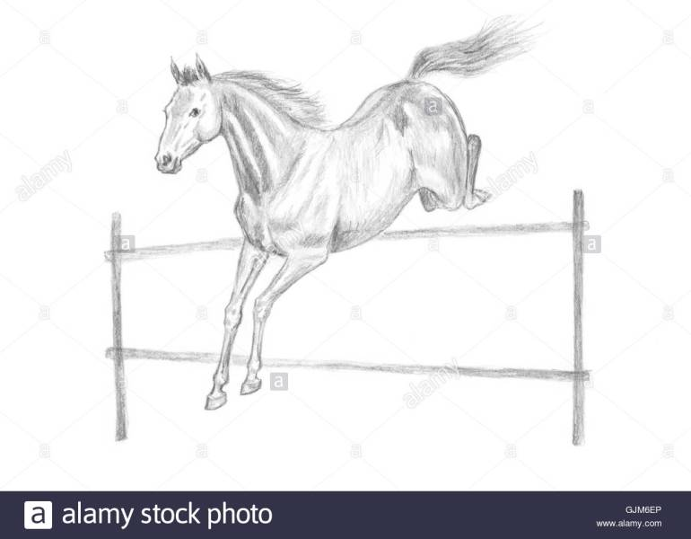 Jumping Horse Drawing at GetDrawings com   Free for personal use     1300x1013 Jumping horse drawing Stock Photo 114770174