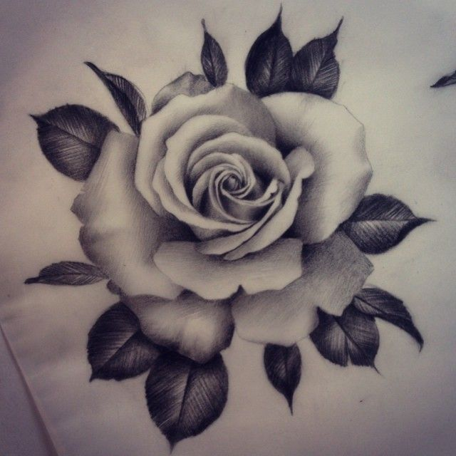 Rose Realistic Drawing at GetDrawings.com | Free for ...