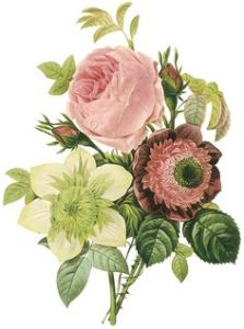 Vintage Flowers Drawing at GetDrawings com   Free for personal use     236x318 tiel and burgandy antique florals drawings