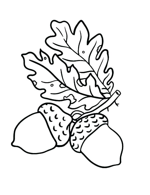 acorn coloring page # 17