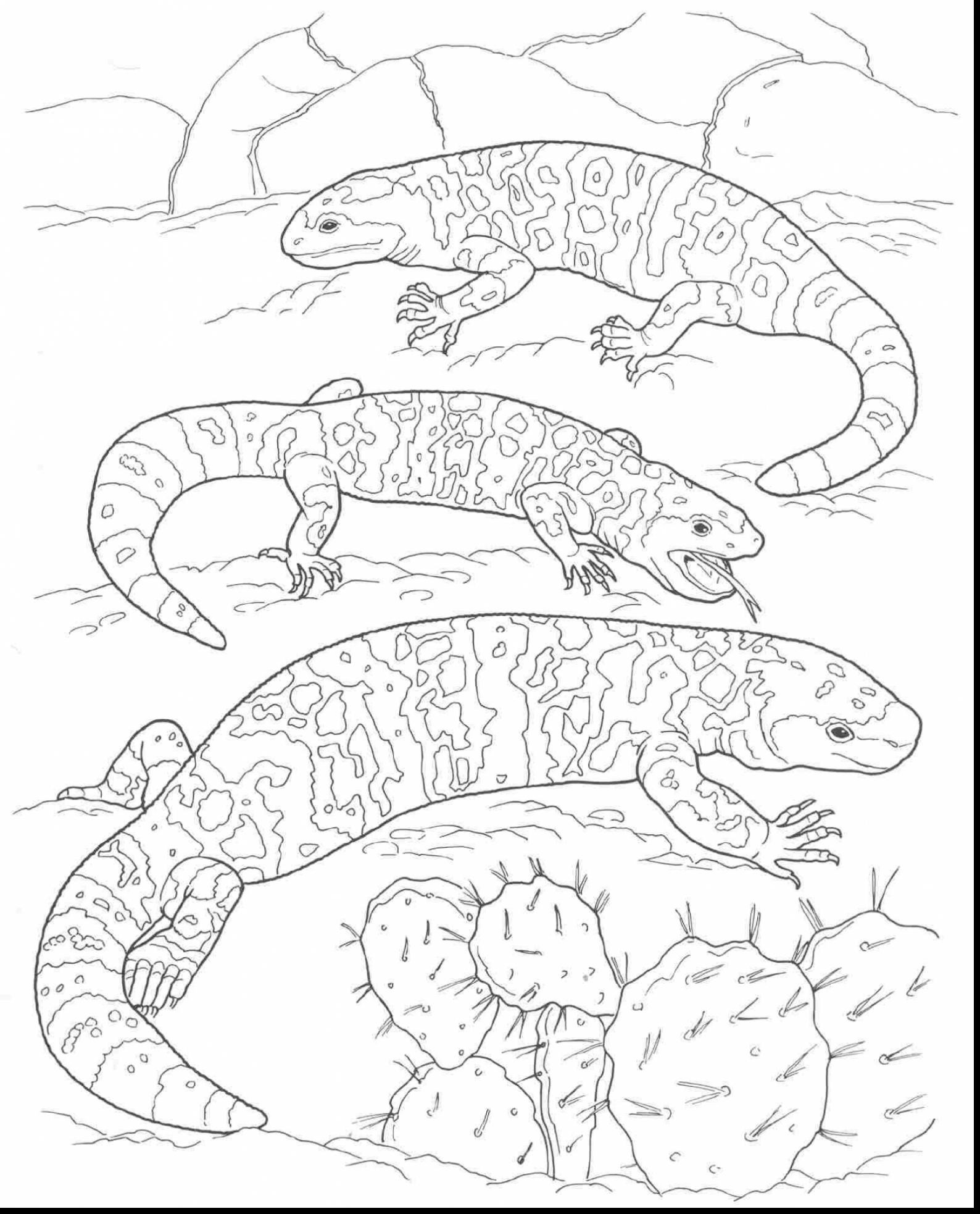Free Coloring Pages Download : Desert Animals Drawing At Getdrawings Free  For Personal Use Of Desert