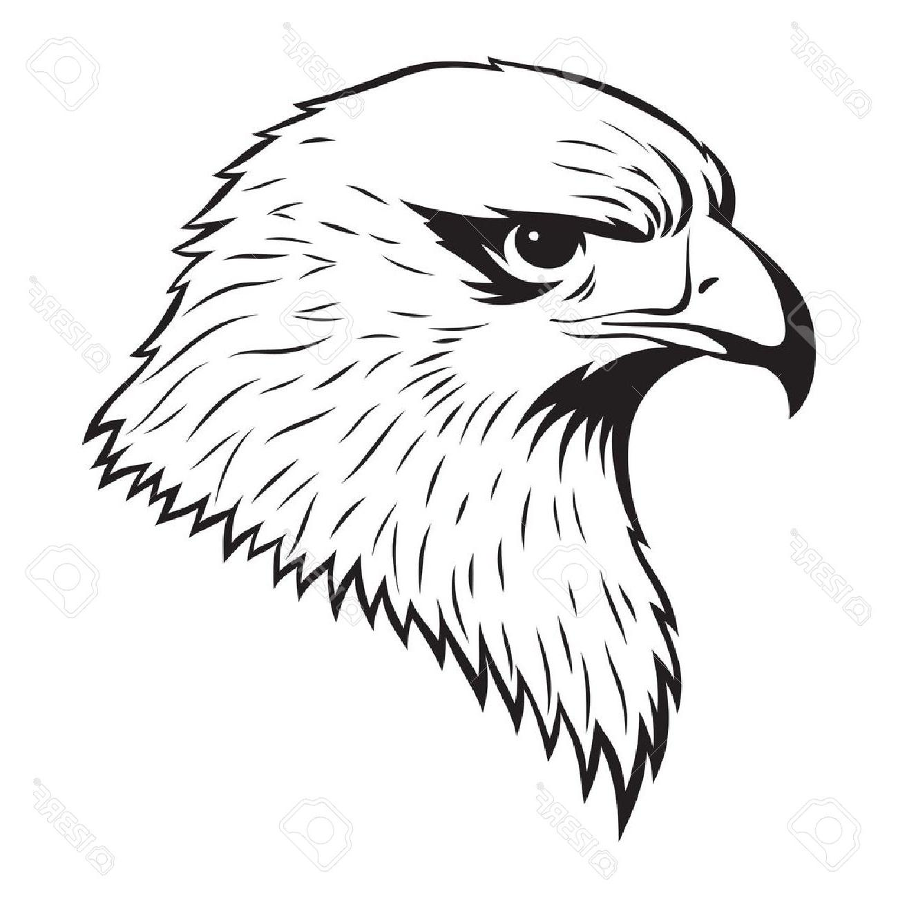 Hawk drawing step by step at getdrawings free for personal use