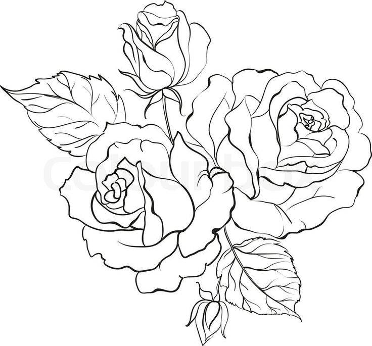 Realistic Rose Drawing at GetDrawings.com | Free for ...