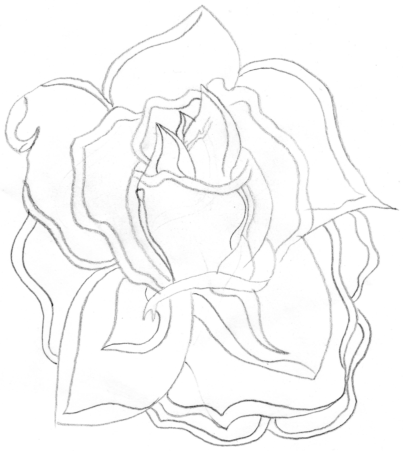 Rose Drawing Outlines at GetDrawings.com | Free for ...