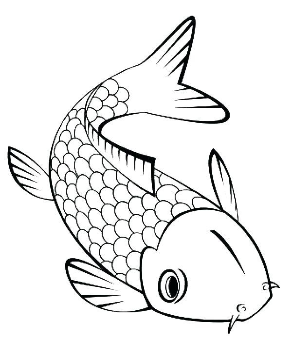 Colorful Angler Fish Real