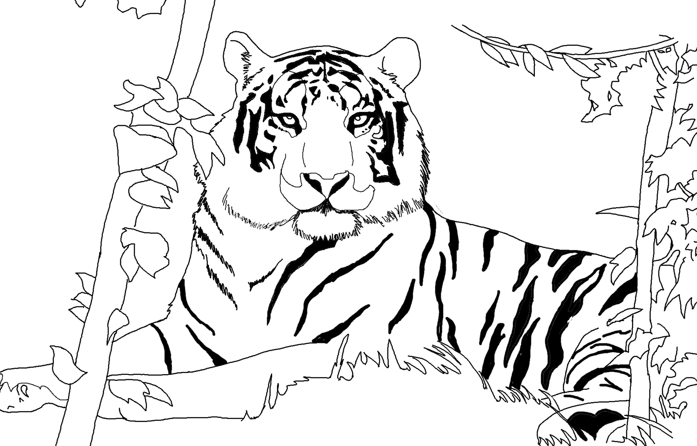 Free Coloring Pages Download : Siberian Tiger Drawing At Getdrawings Free  For Personal Use Of White