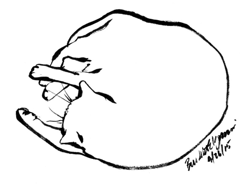 Sleeping Cat Line Drawing at GetDrawings com   Free for personal use     1000x738 ink sketch of cat sleeping Archives   The Creative Cat