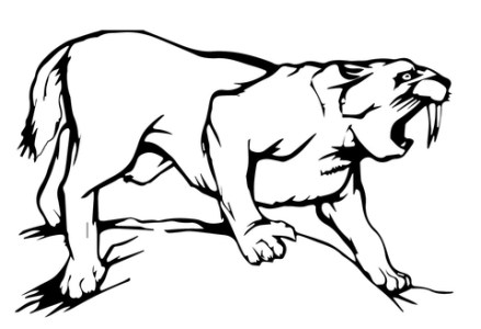 Tooth Line Drawing at GetDrawings com   Free for personal use Tooth     480x328 Sabre Tooth Tiger coloring page Free Printable Coloring Pages