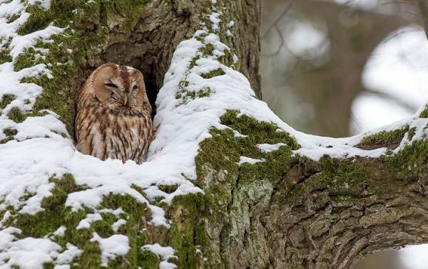Зимующие-птицы-Названия-описания-и-особенности-зимующих-птиц-36
