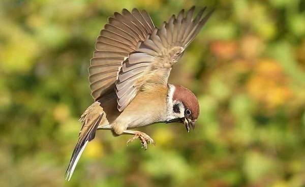 Зимующие-птицы-Названия-описания-и-особенности-зимующих-птиц-5