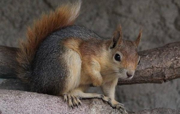 Equirrel-Djur-Beskrivning-Egenskaper-View-Life-Life-and-onsdag-Breath-8
