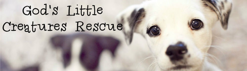 God's Little Creatures Rescue | Animal rescue in Aggieland ...