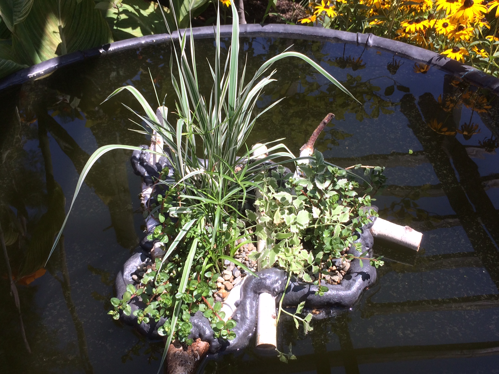 Floating Water Plants Ponds