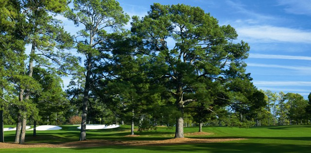 Eisenhower Tree
