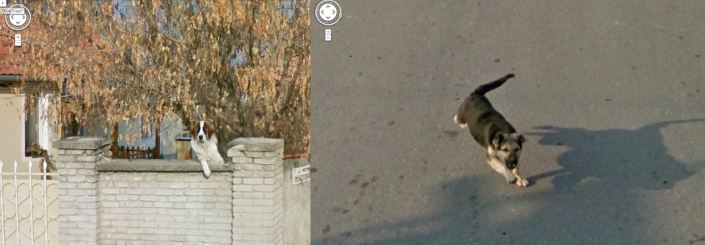 Friendly Dog Mean Dog Google Street View World Funny