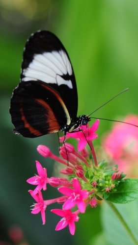 Butterfly Wallpaper for Mobile  Desktop  HD Pretty Butterfly on Pink Flower Wallpaper