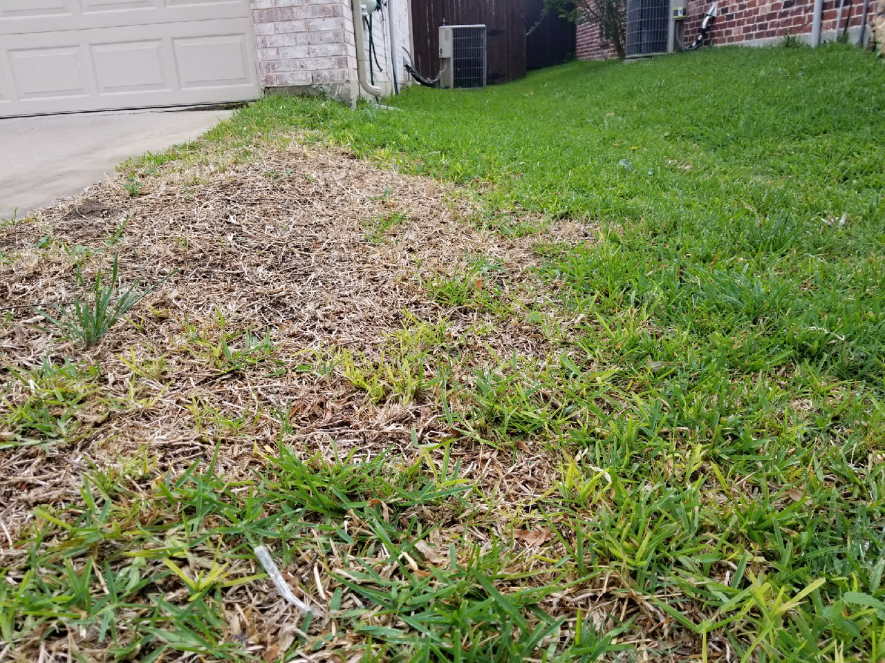 Should You Spring Your Rake Lawn