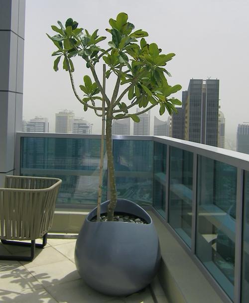 Indoor Hanging Pots Plants