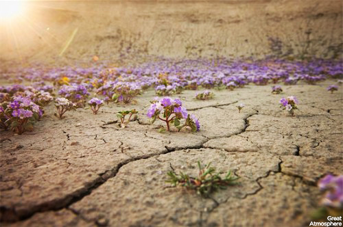 Beautiful blooming desert        Great Atmosphere      Purple flowers desert flowers 6 great atmosphere travel