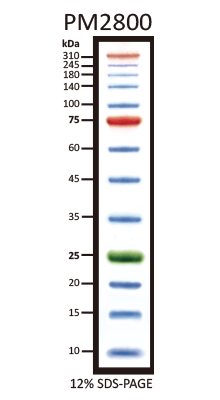 3 Color Pre Stained Protein Markers 10 Kda To 310 Kda