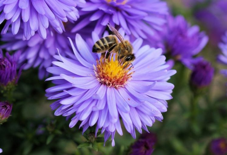 Hot to attract bees to your garden If you want to attract bees into your garden  you don t have to turn the  whole garden into a mass of pollen producing flowers  although that would  look