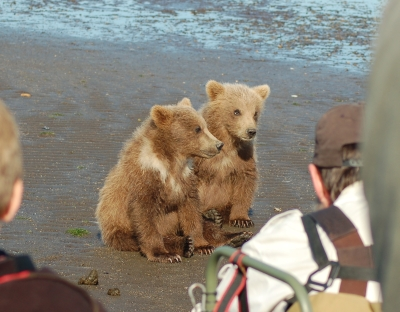 Grizzly bears and people | Grizzly Bear Blog | Page 3