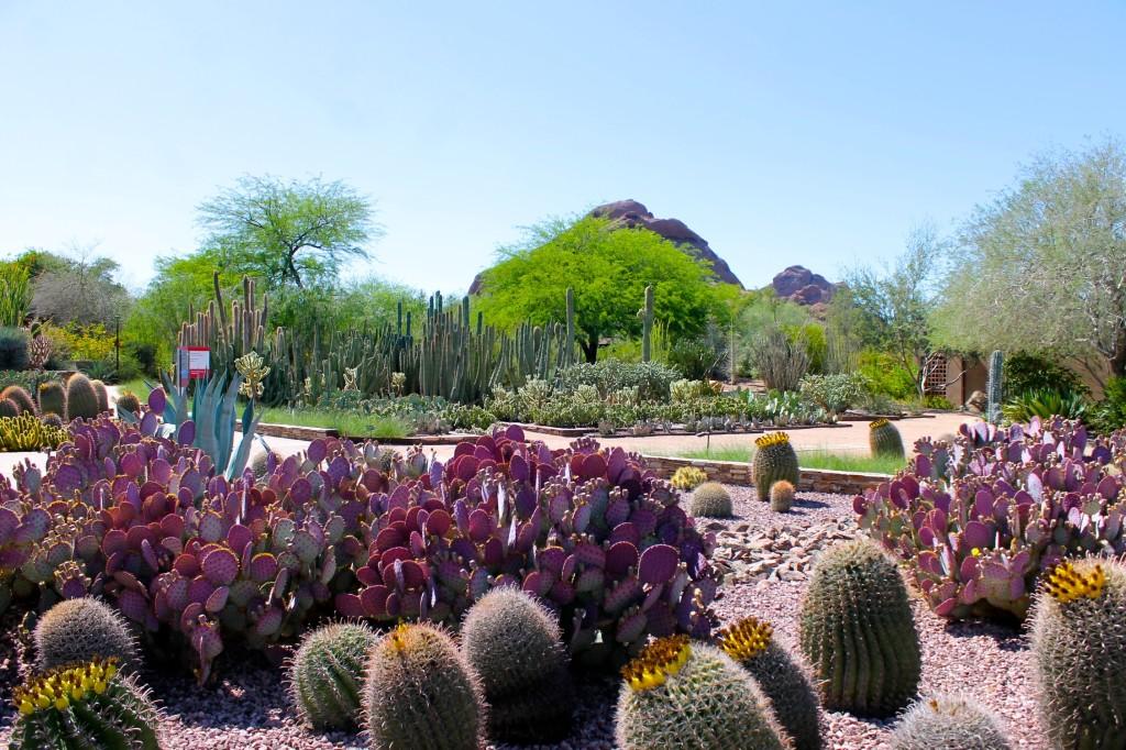 Flowers Garden Desert Botanical