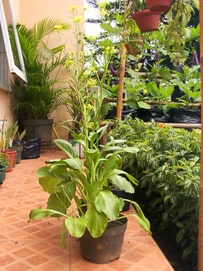 Tanaman Dan Kebun – Guru valentina