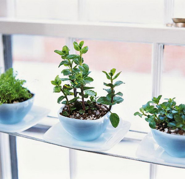 Mini Terracotta Pots Home Depot