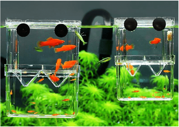Floating Fish Tank Plants