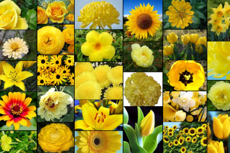 Yellow flowers flowers online 2018 flowers online list of yellow flowers with pictures gallery flower decoration ideas list of yellow flowers with pictures image collections flower yellow flowers in spring mightylinksfo