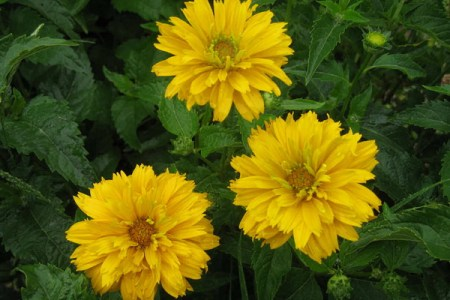 Indian flower names beautiful flowers 2019 beautiful flowers new stock of indian flowers names with pictures images of indian luxury photos of indian flowers names with pictures albion basin wild flower identification mightylinksfo