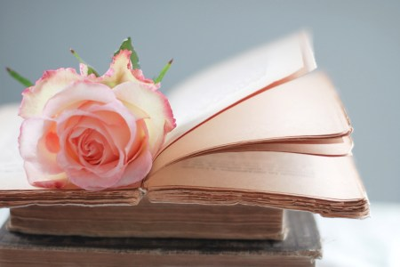Rose on A Book HD Wallpaper   HD Latest Wallpapers rose on a book flower hd wallpaper