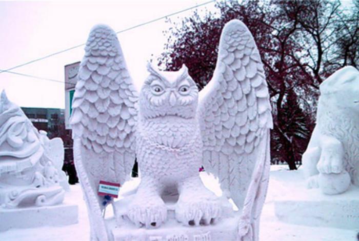 在街道上的美丽的斯诺伊猫头鹰