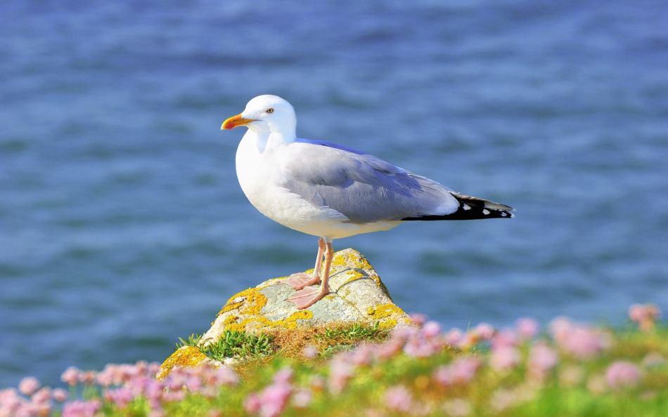 Чайка на теплом побережье