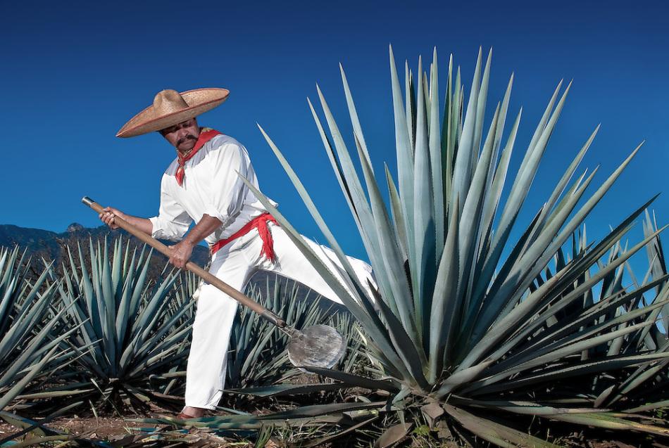 Adawa mexicano