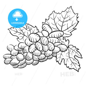 Sketched Grapes with Leaves, Black and White - Hebstreits