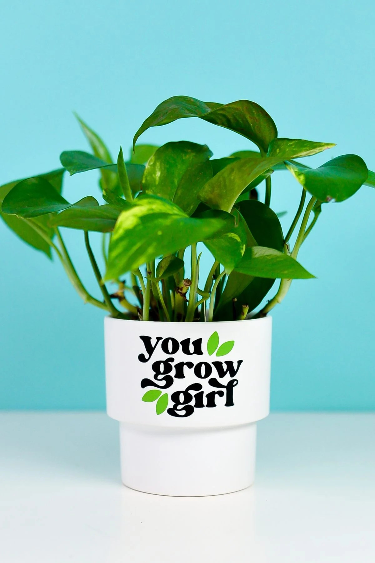 """Finished pot with """"you grow girl"""" and a plant inside"""