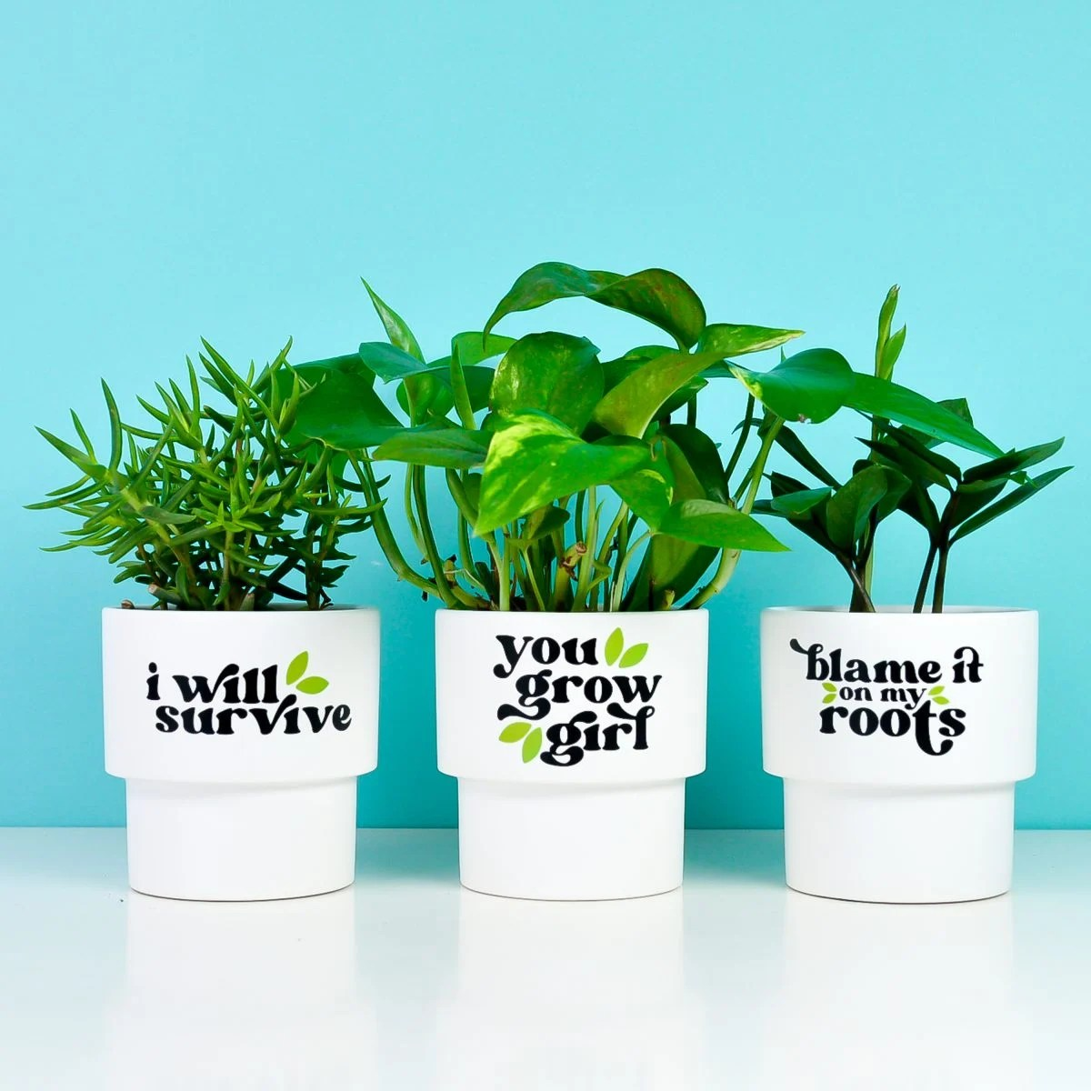 Finished funny flower pots with plants on a teal background