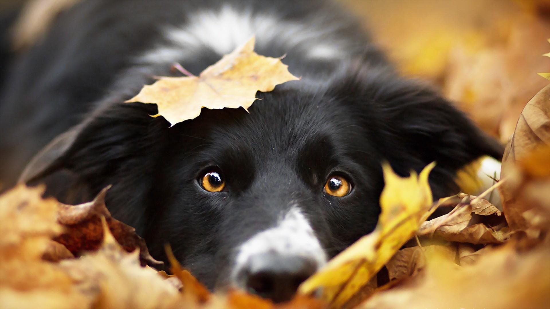 Cute Animal Thanksgiving Wallpaper