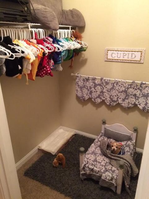 Dog Mom Turned Her Closet Into A Cute Bedroom For Her Pooch