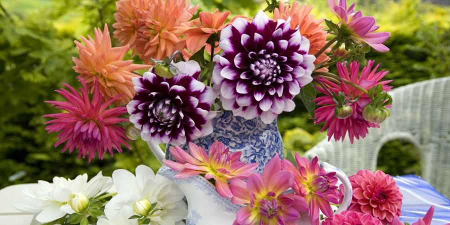 11 Best Summer Flowers for Your Garden   Pretty Summer Blooming Plants image