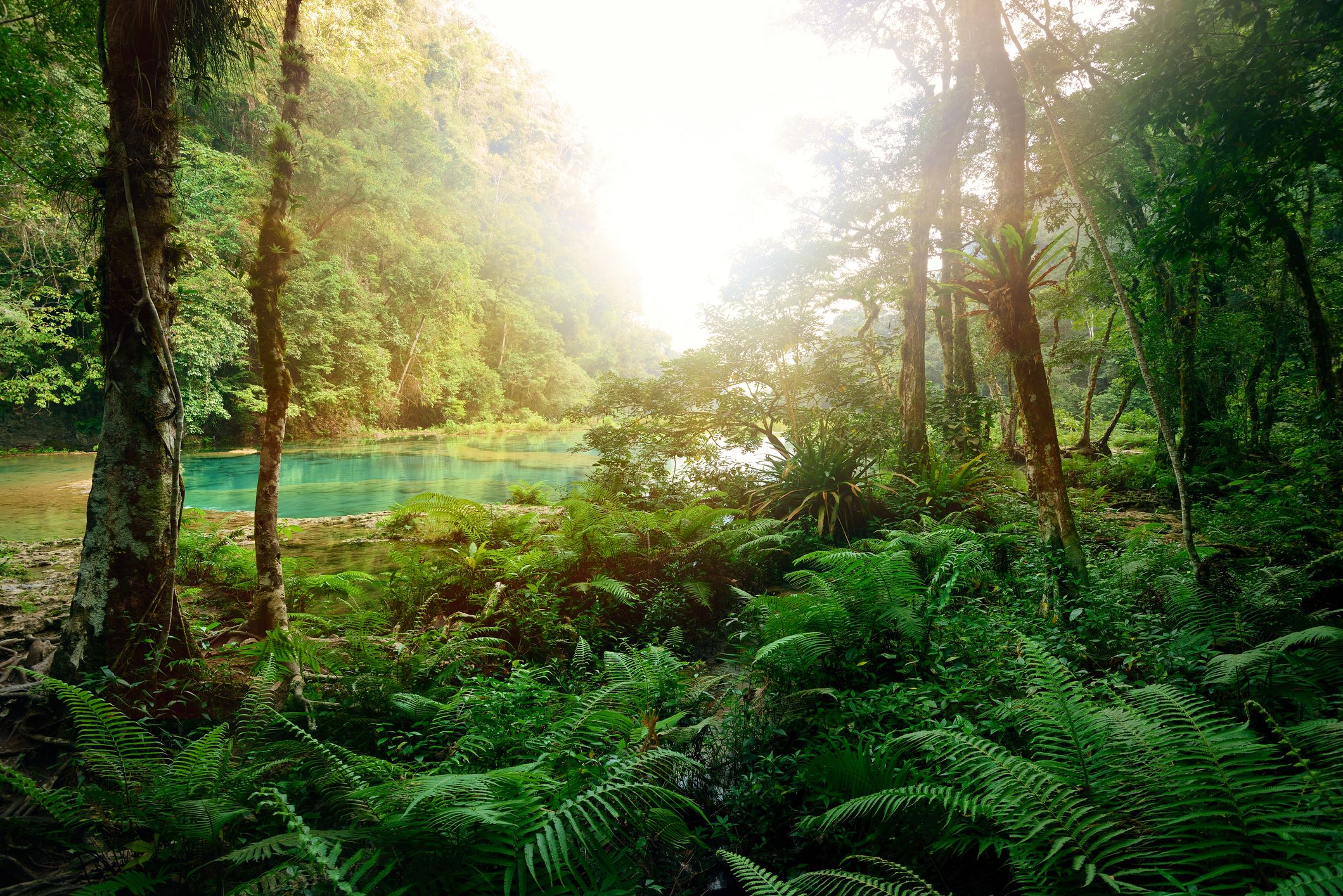 Rainforest Tropical Web Food Amazon