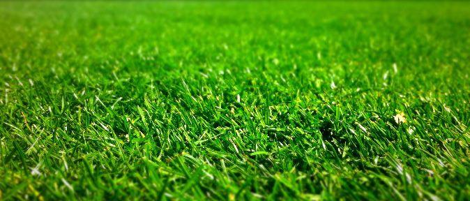 Ammonium Sulfate Lawns