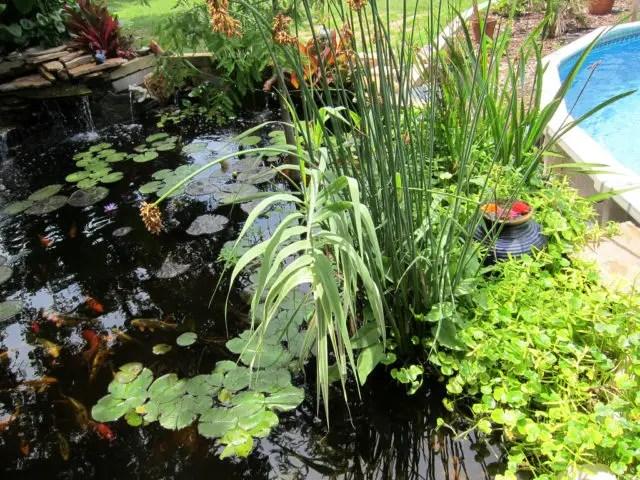 Preformed Garden Ponds
