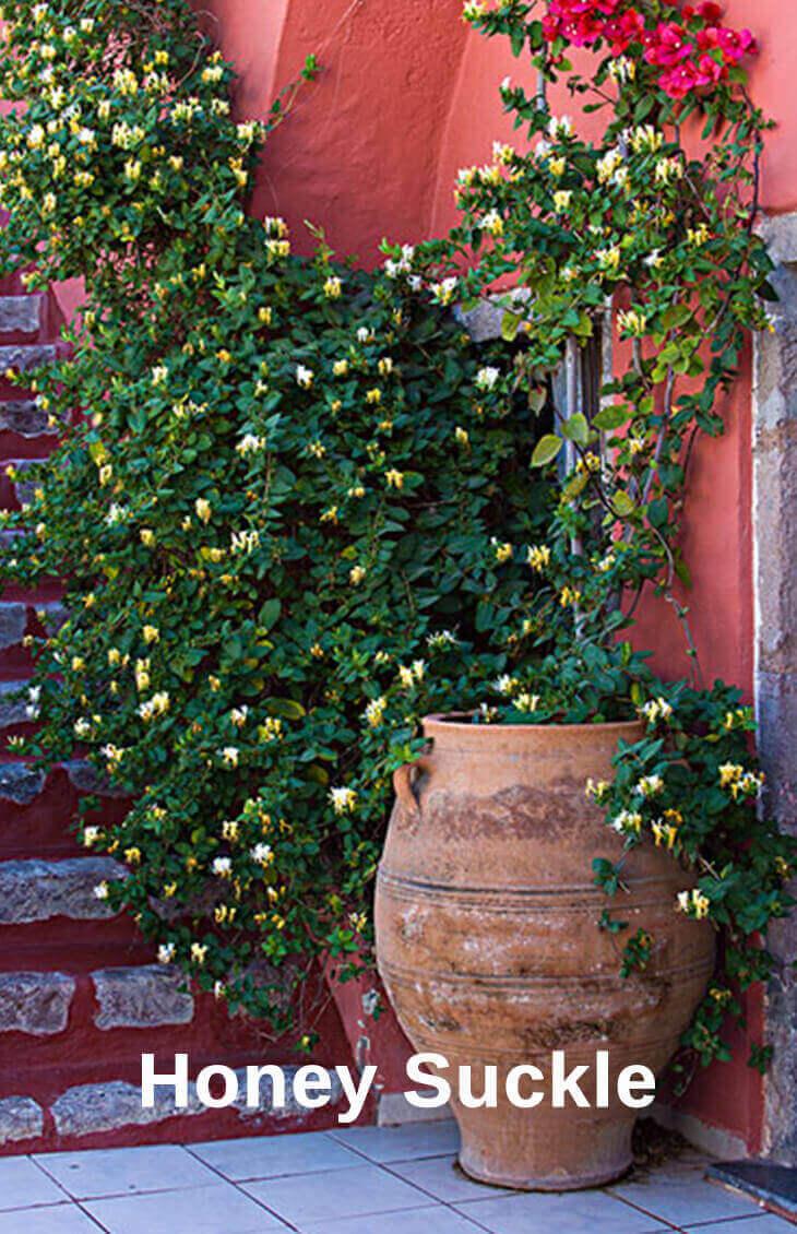 Top 10 Pergola Plants To Grow Your Pots Home Gardeners