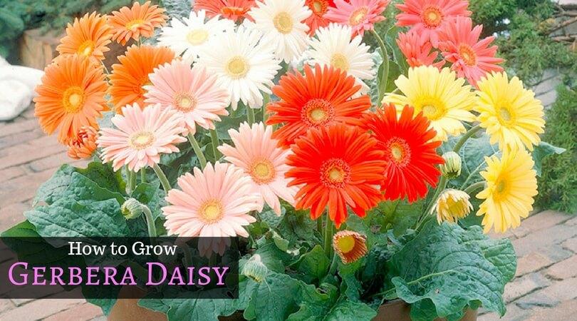 How Start Vegetable Garden