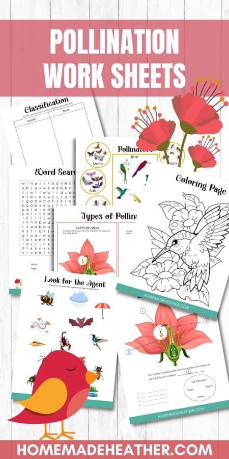 Pollination Printable Work Sheets